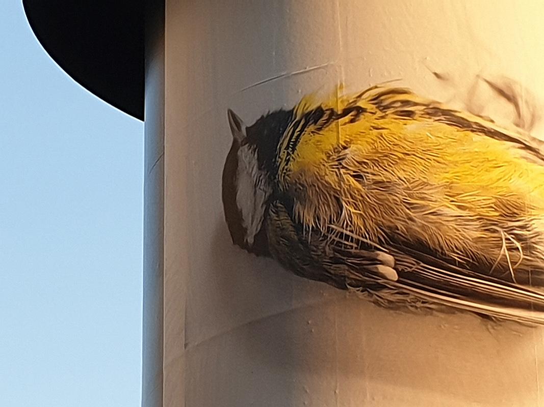 Plakat Vogelsterben